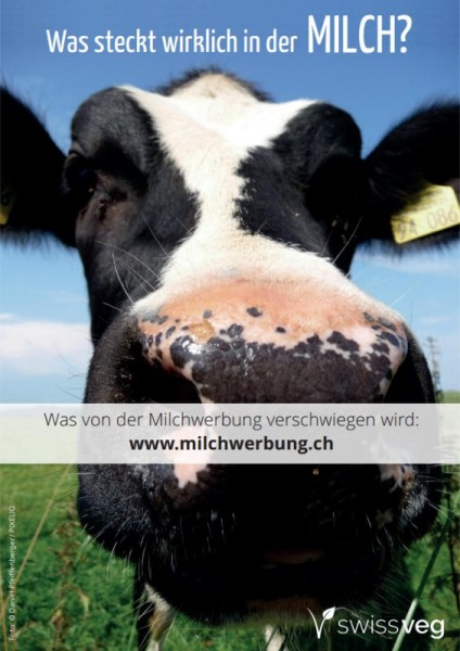 Was steckt wirklich in der Milch?